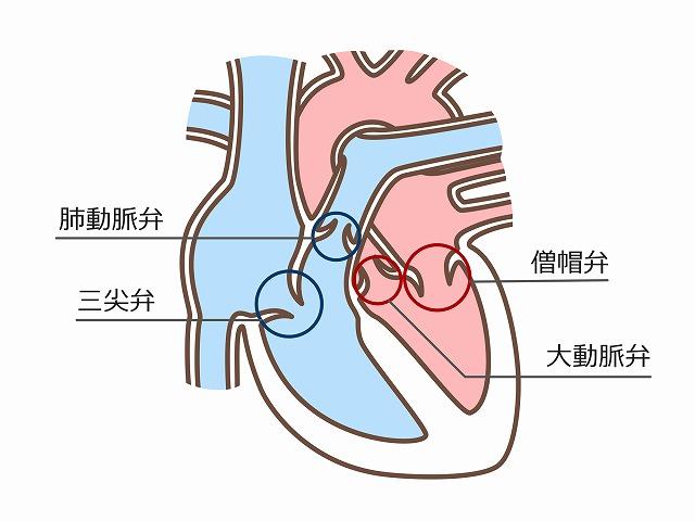 4つの心臓弁